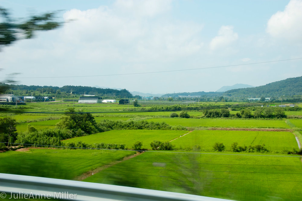 fields near DMZ