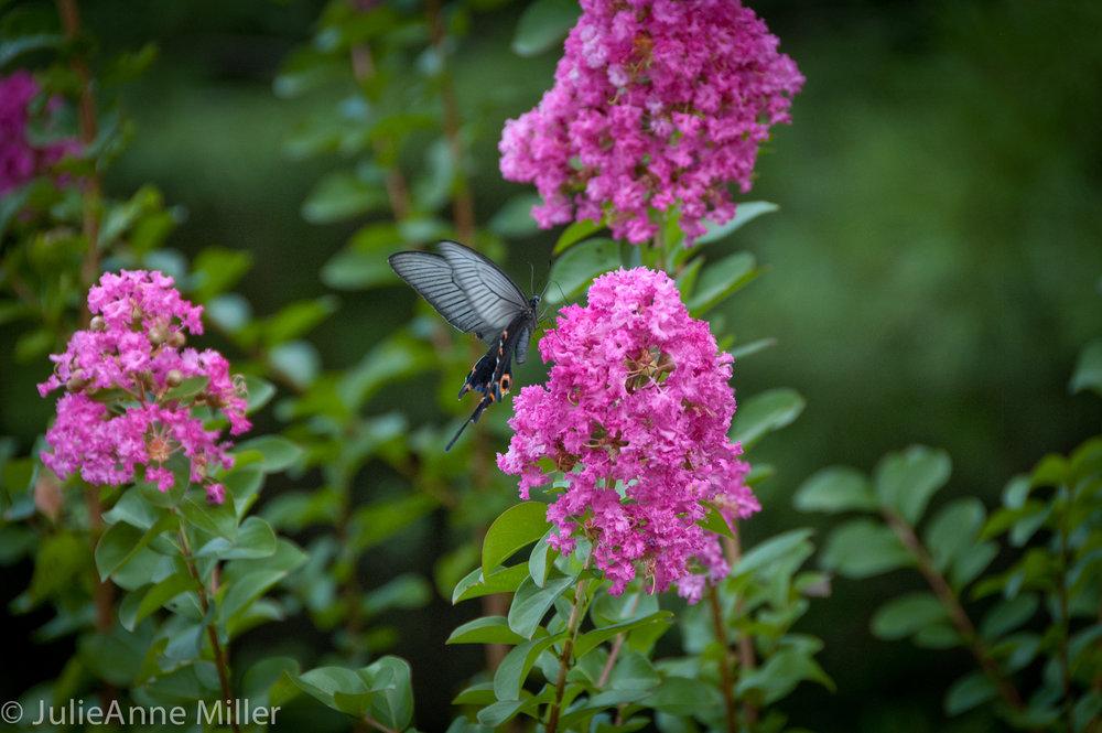 flora fauna Gyeongju South Korea