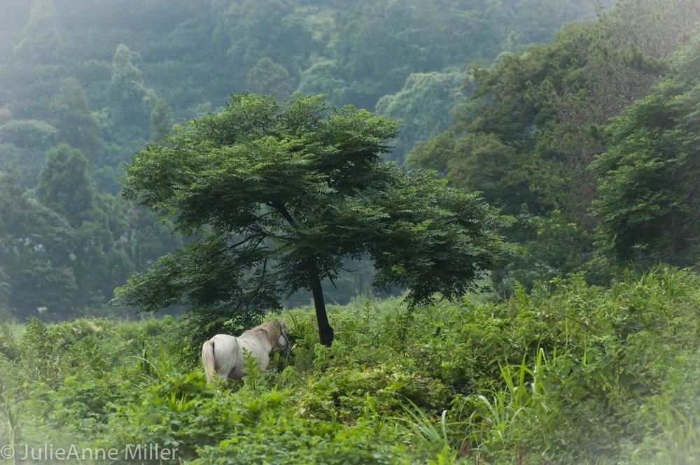 unicorn, Jeju Island, Korea