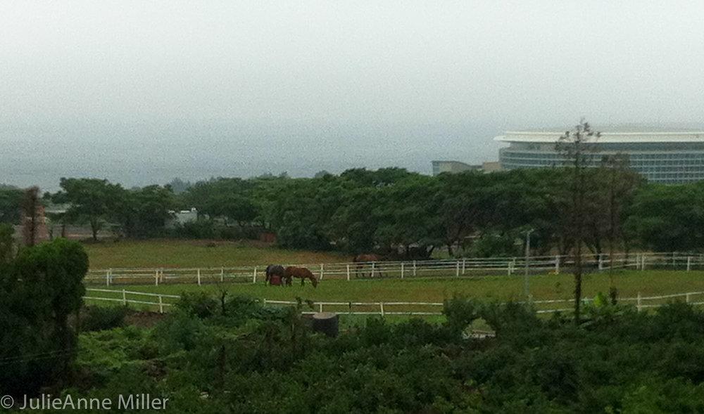 Jeju Convention Center, Korea