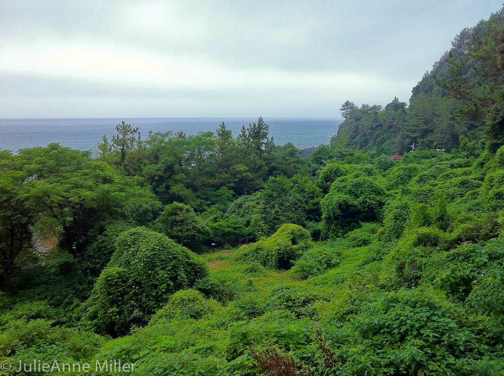 Geolmae Eco Park (걸매생태공원), Jeju Korea