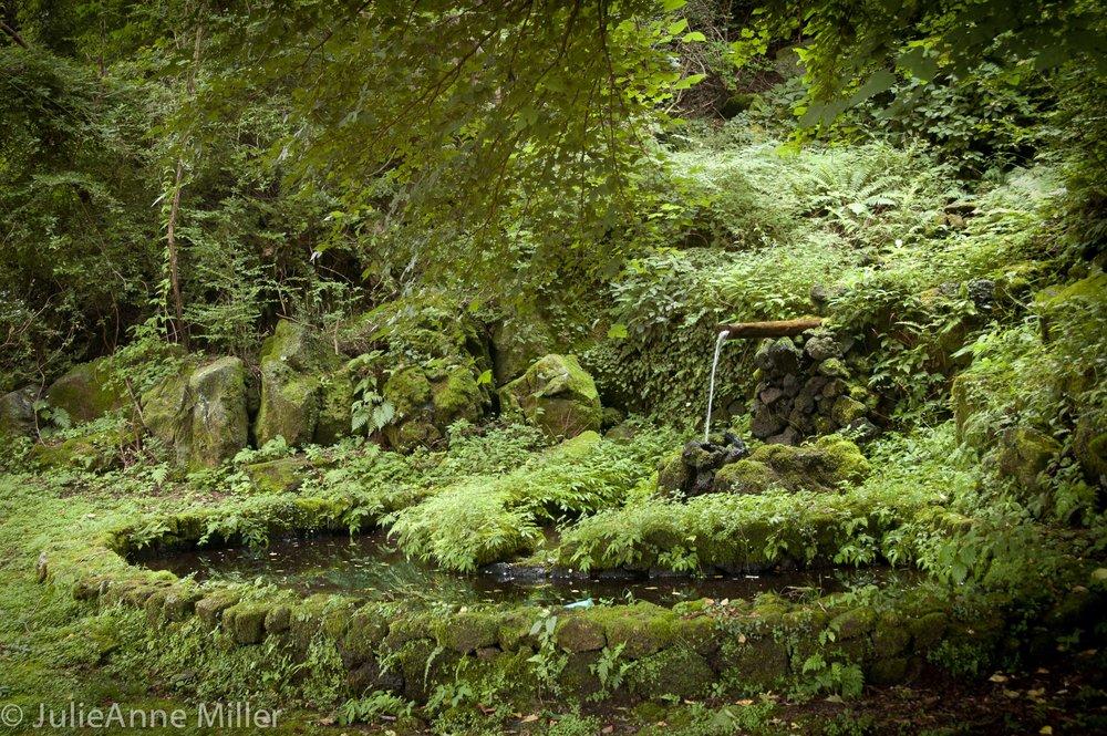 Bijarim Forest, Jeju, South Korea