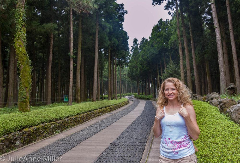 Jeolmul Natural Forest, Jeju, Korea