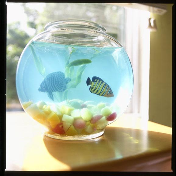 JELL-O Aquarium