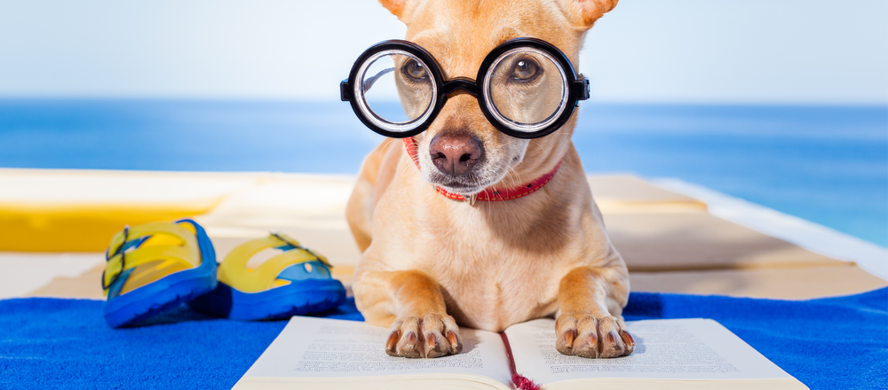 Summer Reading_Dog_MadClientistHeader.png