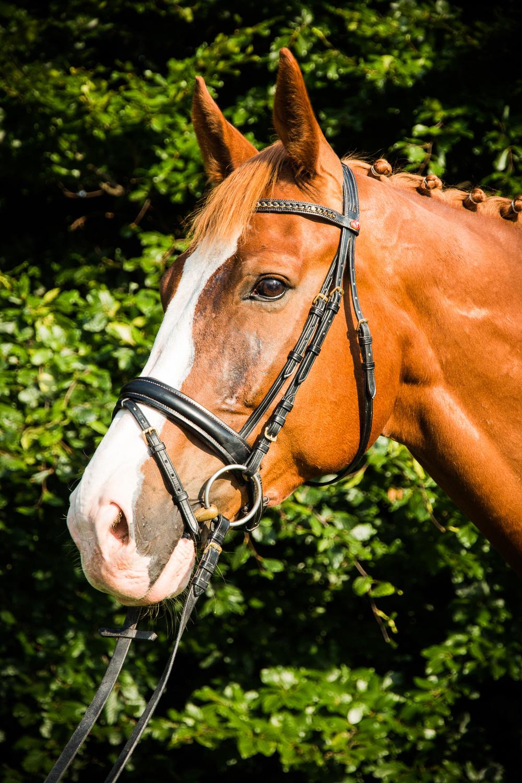 Pferde für Website-11.jpg