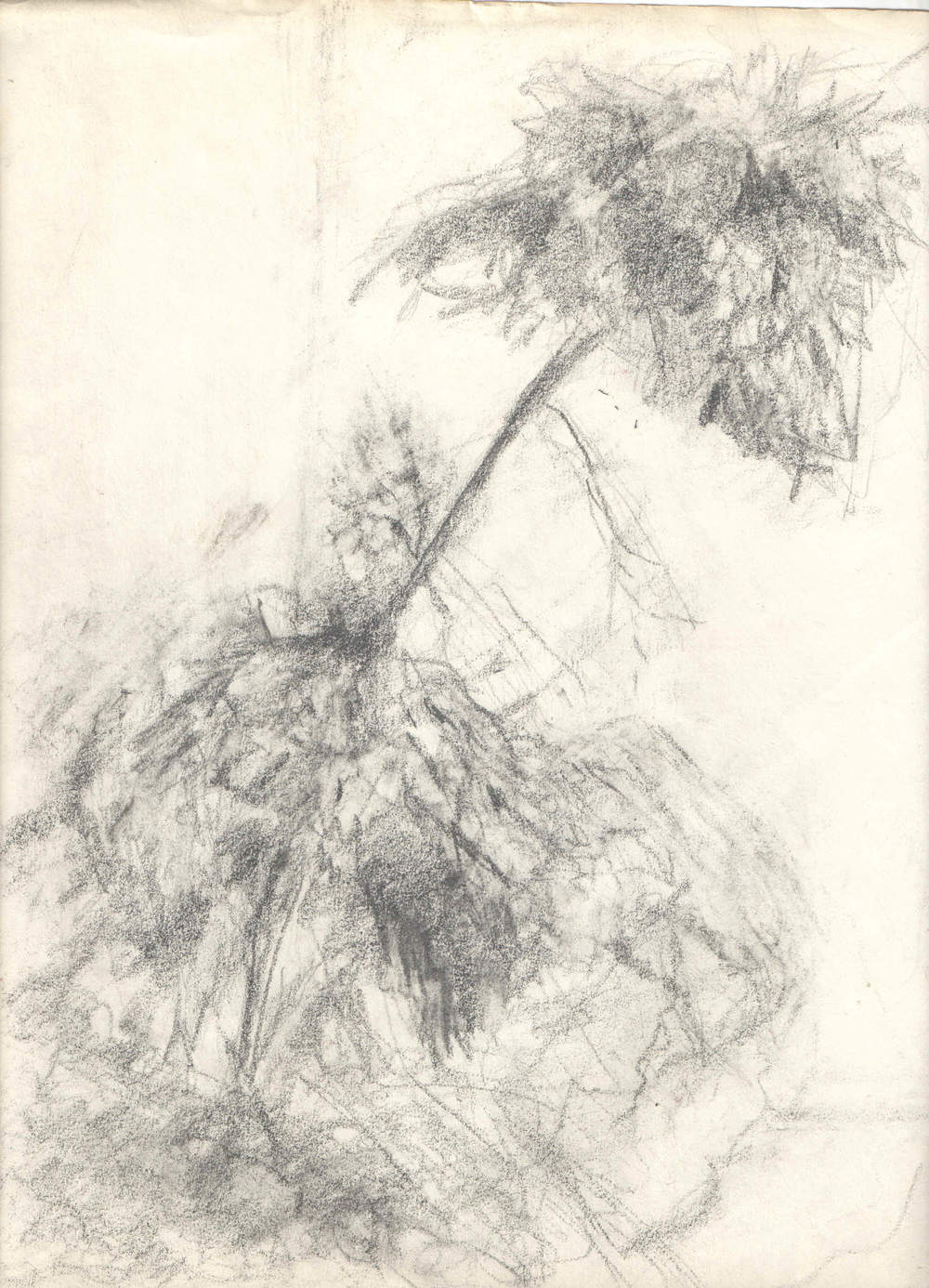Tree Abstract Pencil on paper 8x11""
