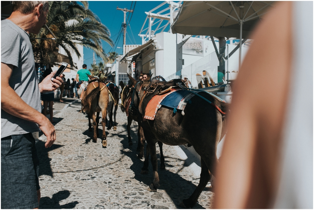 We opted not to do it because Mike is not a fan of horses, but you could take donkey rides down to the old port!