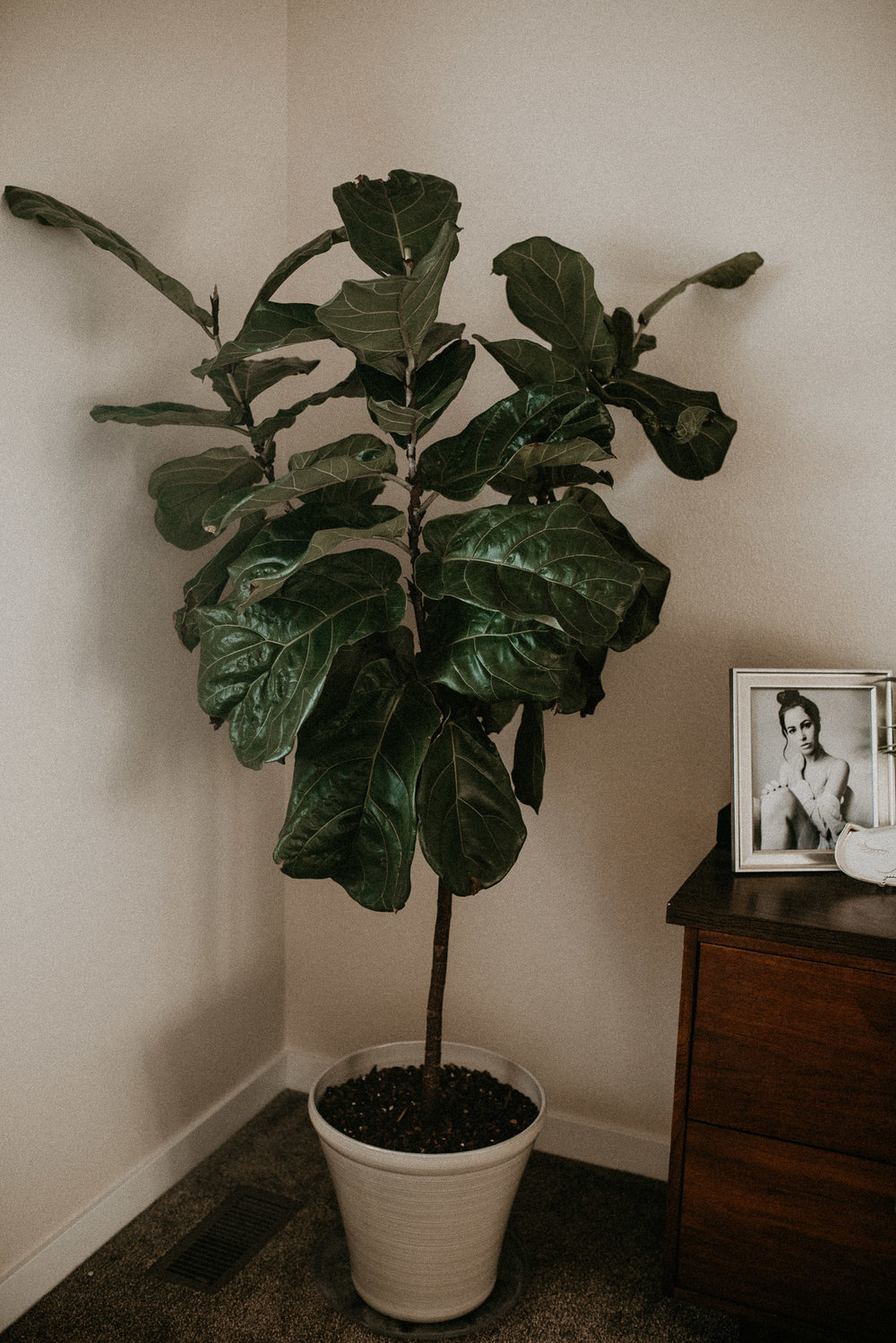 Boise Boudoir Photographer Boise Senior Photographer Makayla Madden Photography Mid Century Modern Dresser Fiddle Leaf Fig Monstera Home Decor Ideas