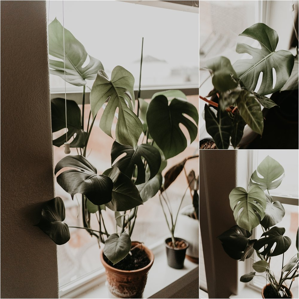 Boise Senior Photographer Boise Boudoir Photographer Makayla Madden Plant Lady Indoor House Plant Care Advice Tips Monstera Deliciosa Care  5-1-1 Potting Mix