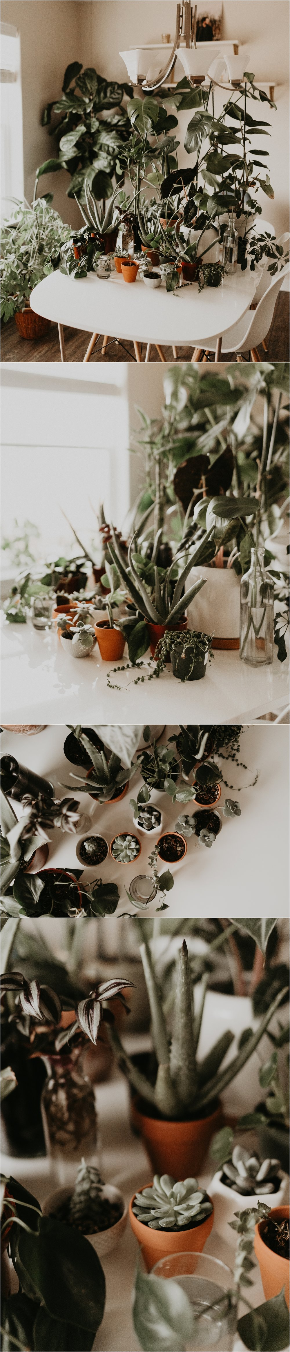 Succulent Care Boise Senior Photographer Boise Boudoir Photographer Makayla Madden Plant Lady Indoor House Plant Care Advice Tips Boise Greenhouses Edwards North End Organic Nursery 5-1-1 Potting Mix