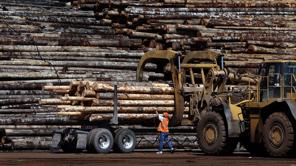 A worker releases the bindings on a truckload of logs at Seneca Sawmill in Eugene.  Photo by Brian Davies