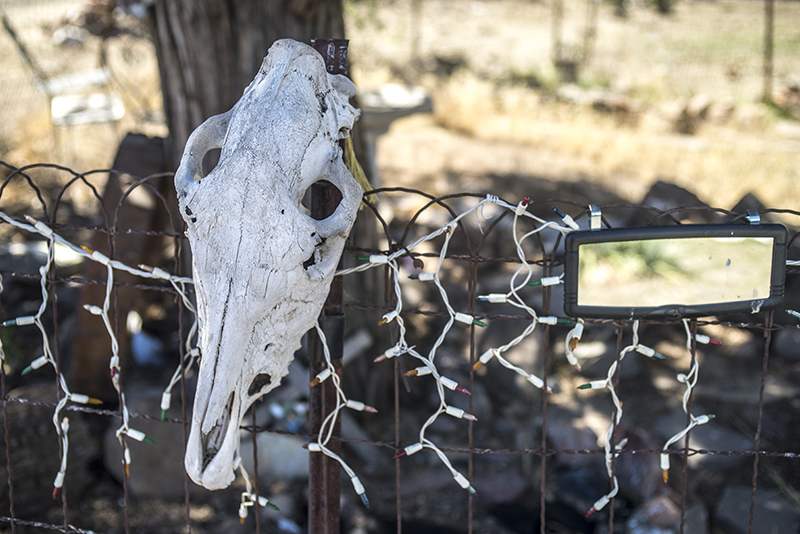 At the home of Laqaixit Tewee, an author of books for children, and her husband are many totems. They often include mustang skulls as there are wild mustangs in the area.  Photo by Joe Cantrell