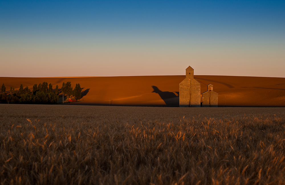 The A.H. McIntyre grain elevator north of Athena, photographed at sunrise. Photo by Fred Joe