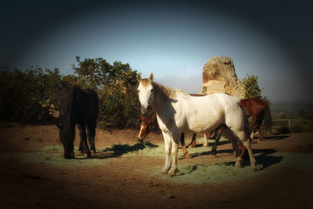herd 12.JPG