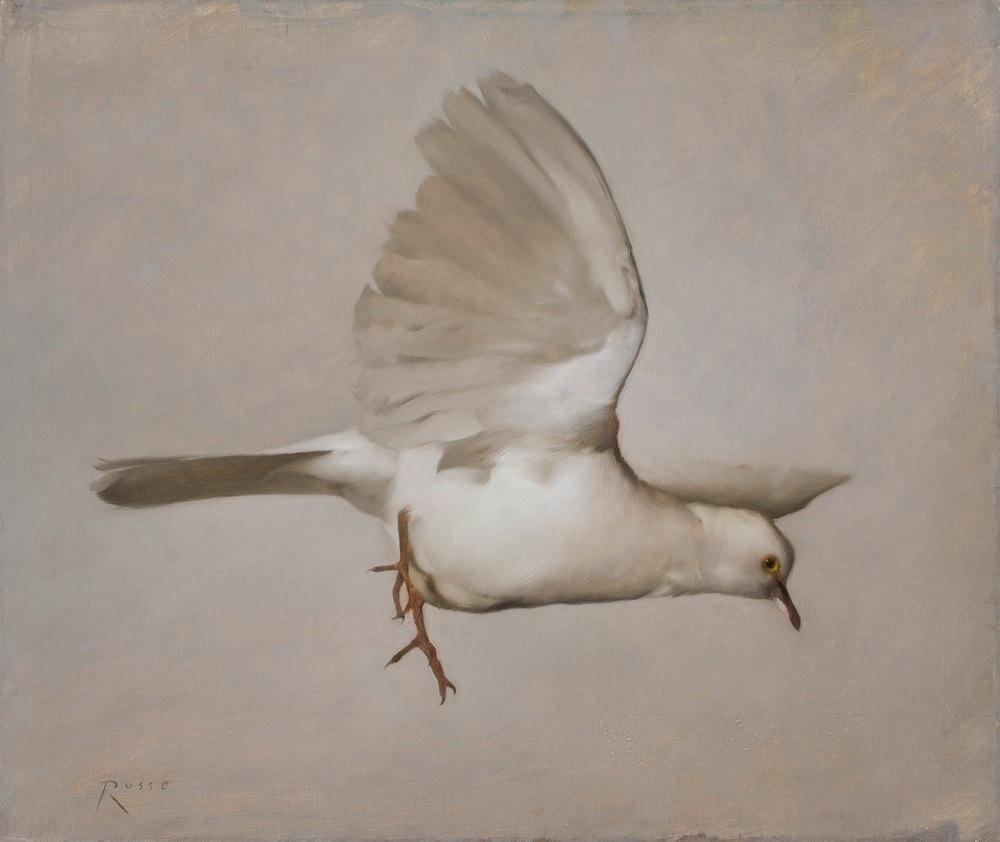 Dove of Marais