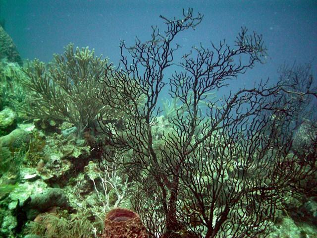 belize-scuba-diving-.jpg