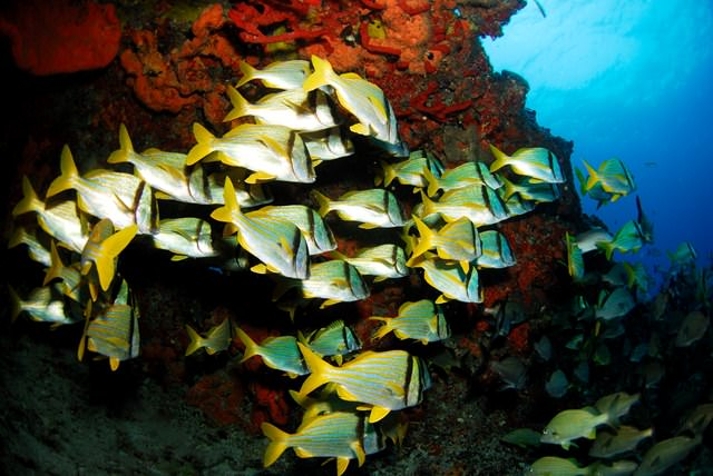 belize-scuba-diving-2.jpg