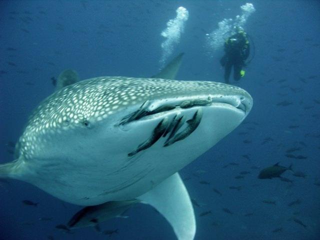 belize-scuba-diving-4.jpg