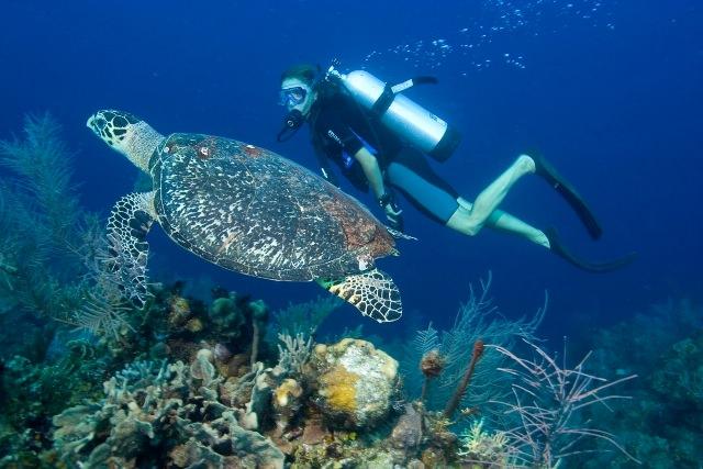 belize-scuba-diving-3.jpg
