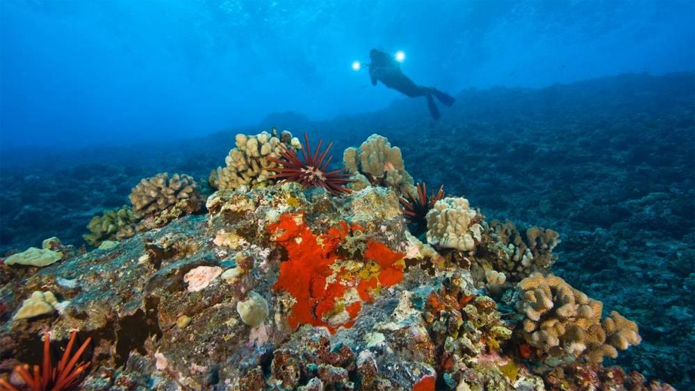 Maui snorkeling.jpeg