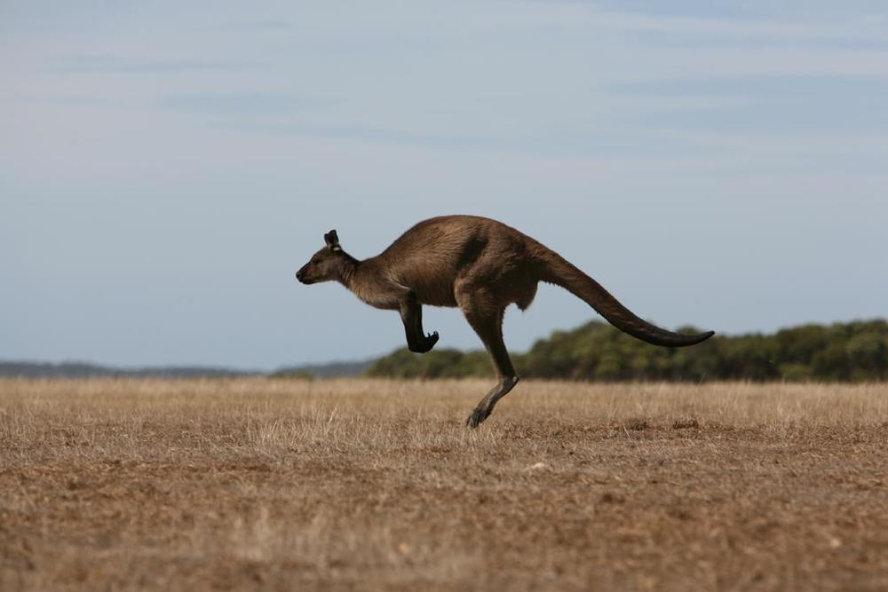 luxury kangaroo travel