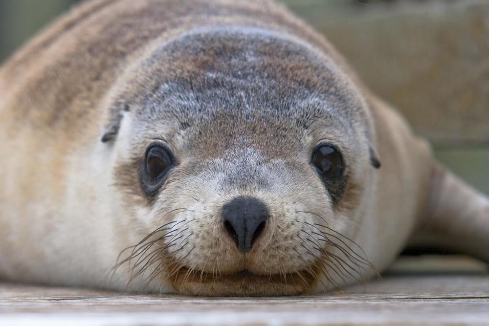 Seal travel photo