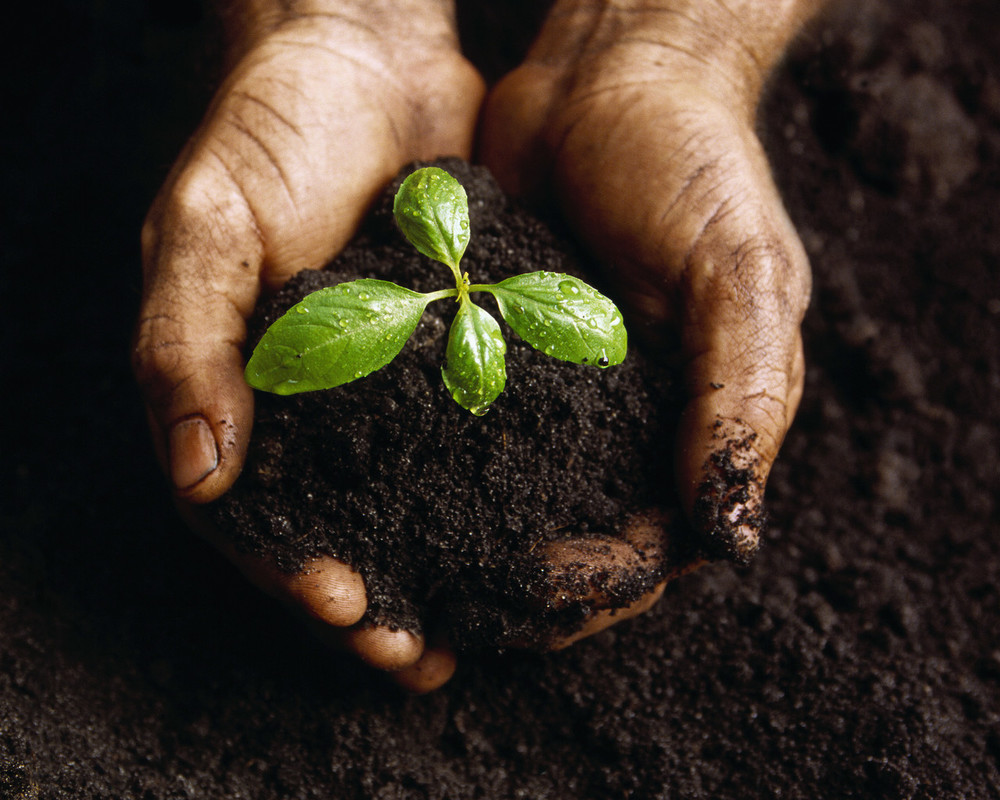 How does soil form mr mulroy 39 s earth science for Earth or soil