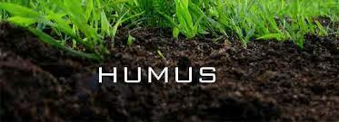 humus.jpeg