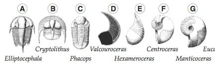 fossils A-G.jpg