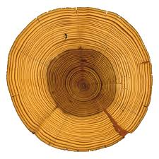 tree ring.jpeg