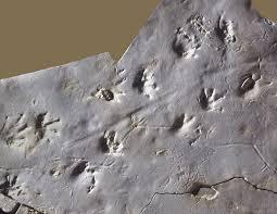 trace fossil.jpeg