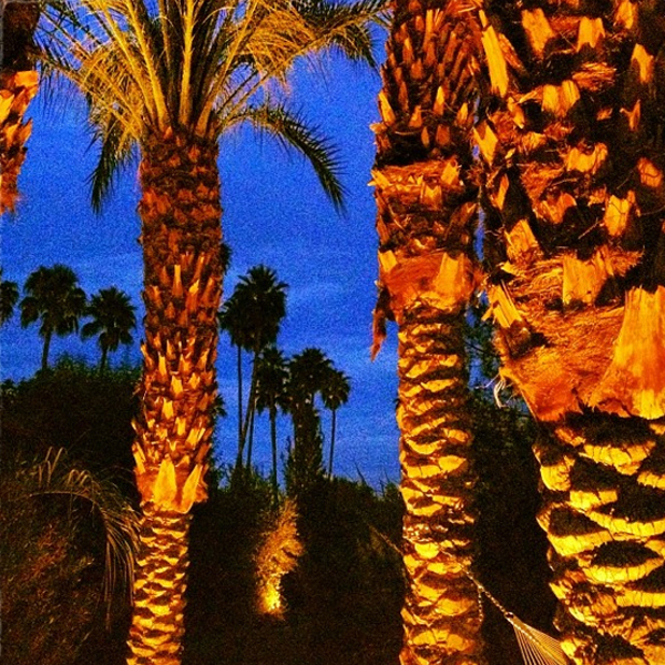 Palm trees at night