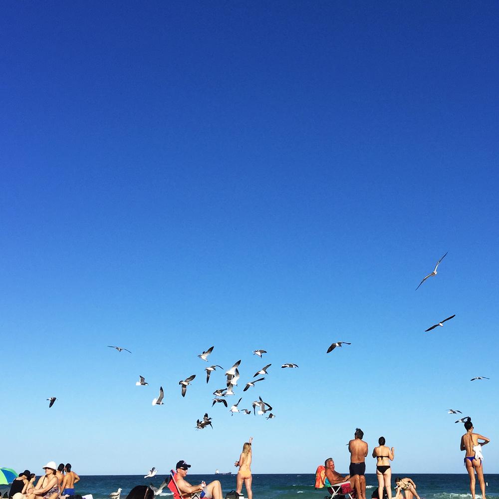 LizNehdi_Miami_Seagulls.jpg