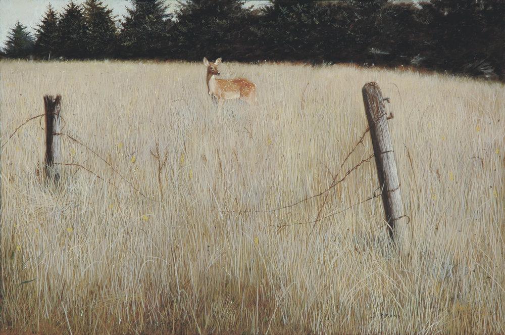 DeerCrossing-1600.jpg