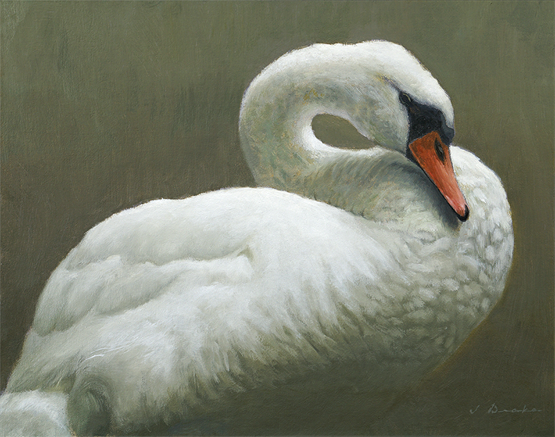 The Swan at Mayview Lake - oil