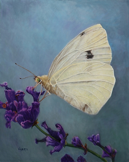 """White Butterfly"""