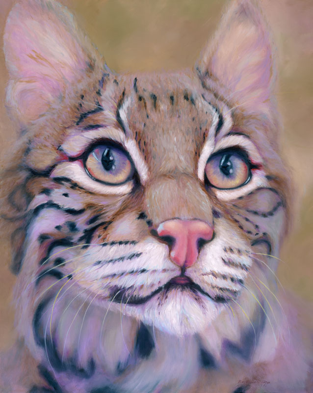 """Inquisitive Bobcat"""