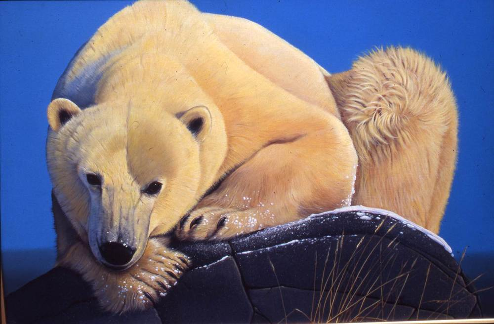 """Polar Bear"""