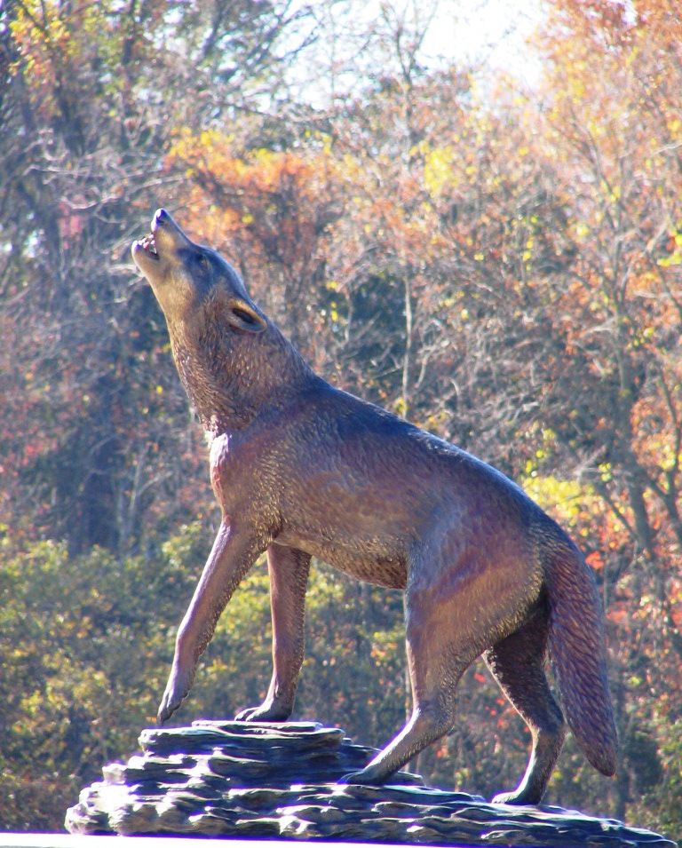 19 Wolf cr 7-11.jpg