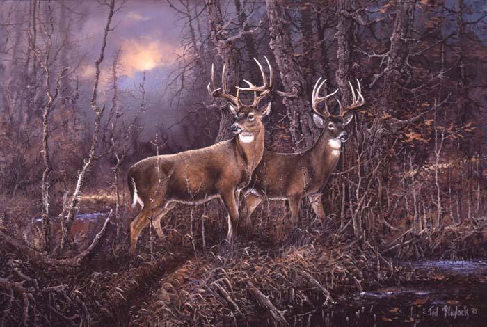 'Gary's Deer'