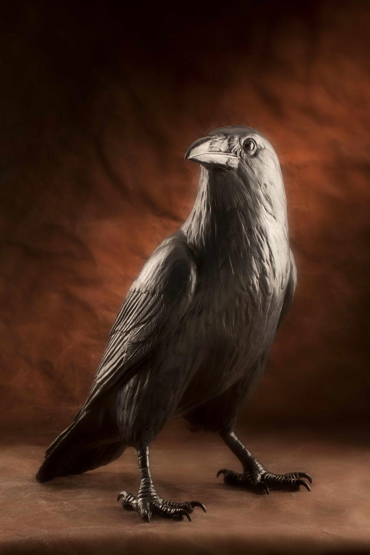 'Corvus'