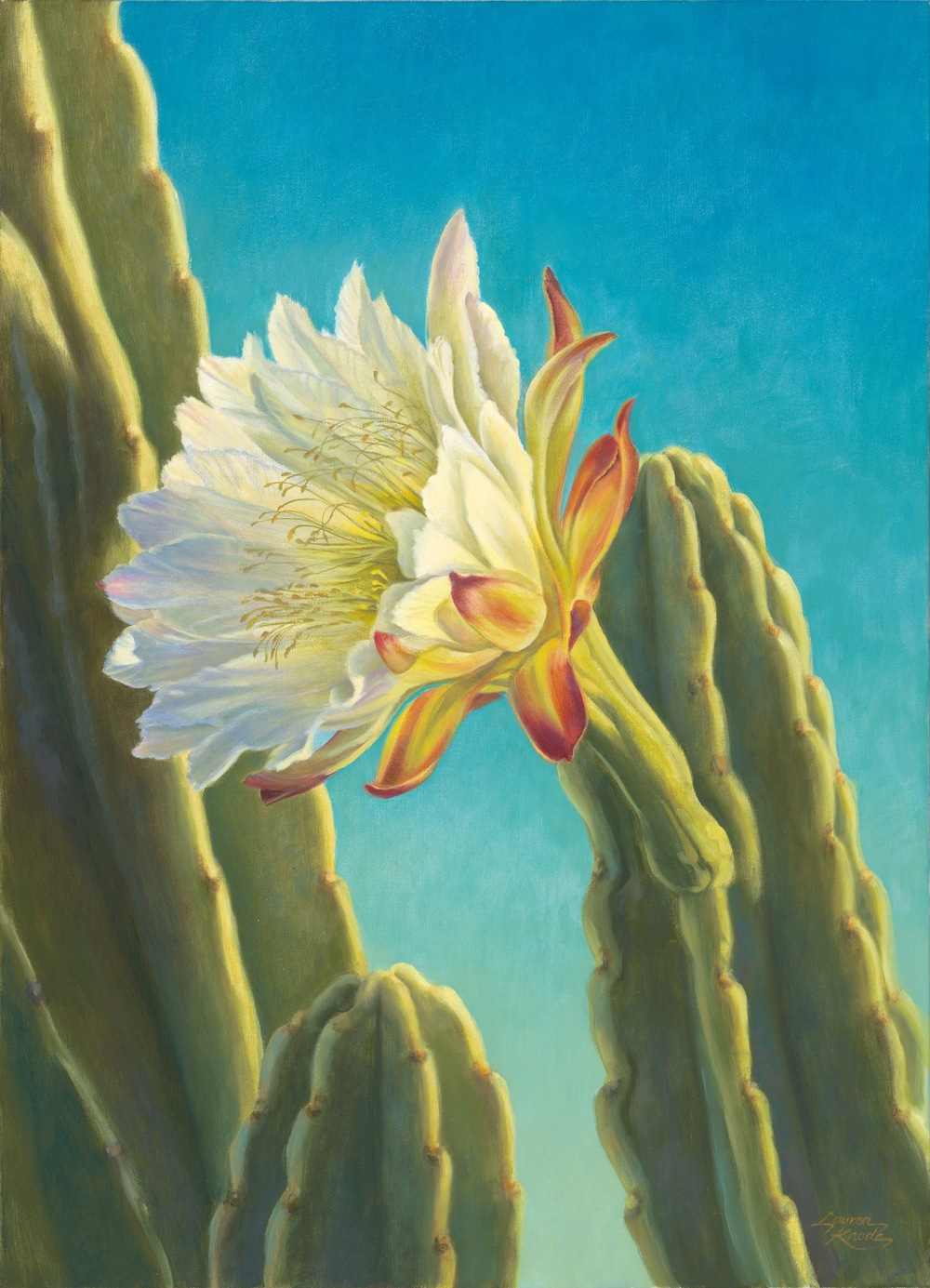 """Cereus Bloom II"""
