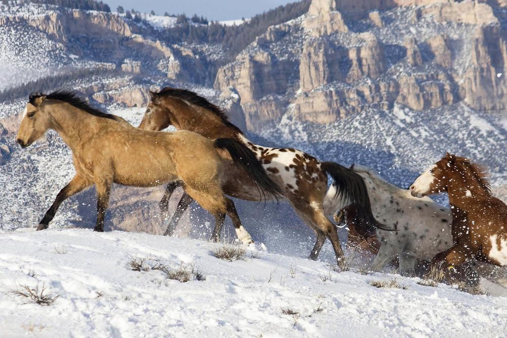 6 9942_Snowy Mountain Run_SQByrd_6x4@150.jpg
