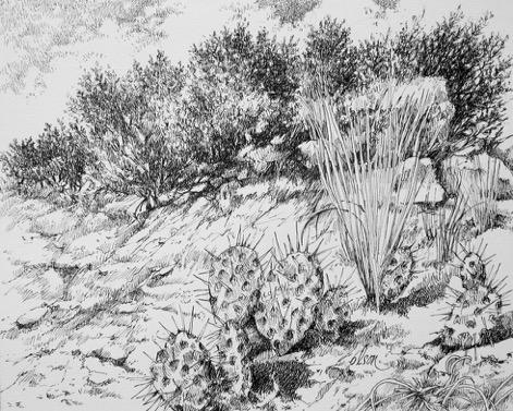 Olson_ Curt_ Cactus Ridge_ Pen&Ink_ 11x14_ $250.jpeg