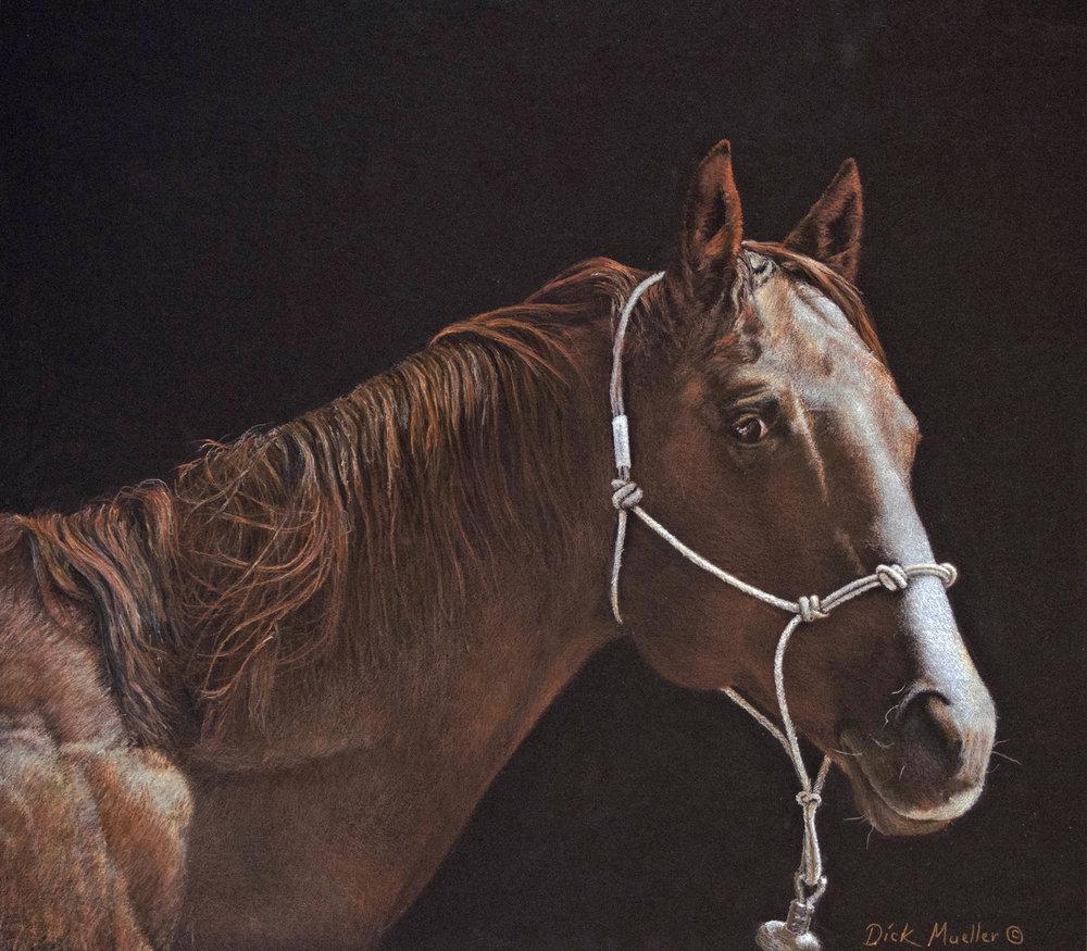 Shoofly's Horse