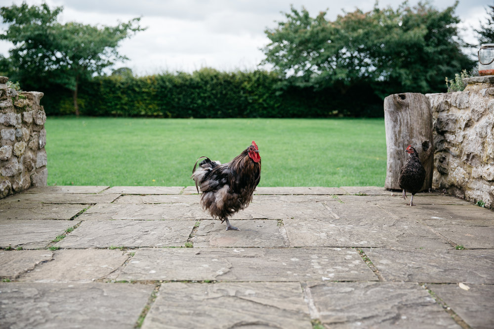 Chickens at The Star Inn Harome Yorkshire Wedding Photography
