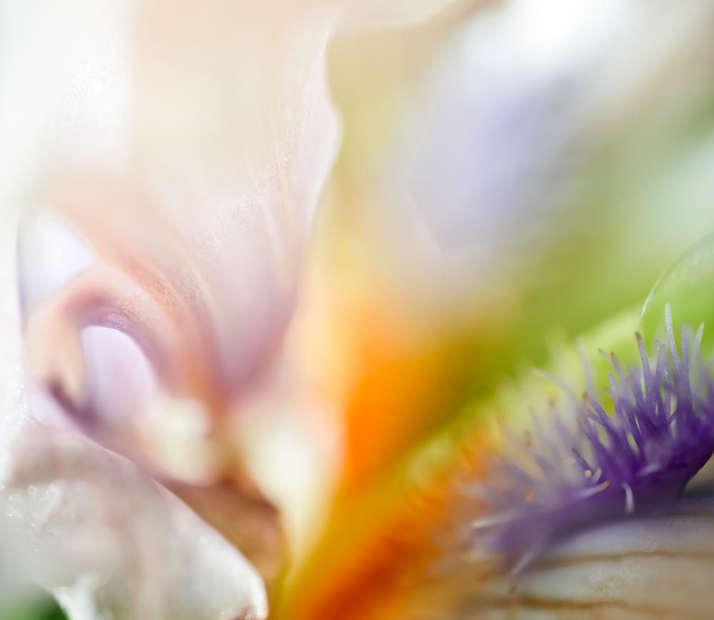 irises (2 of 16).jpg