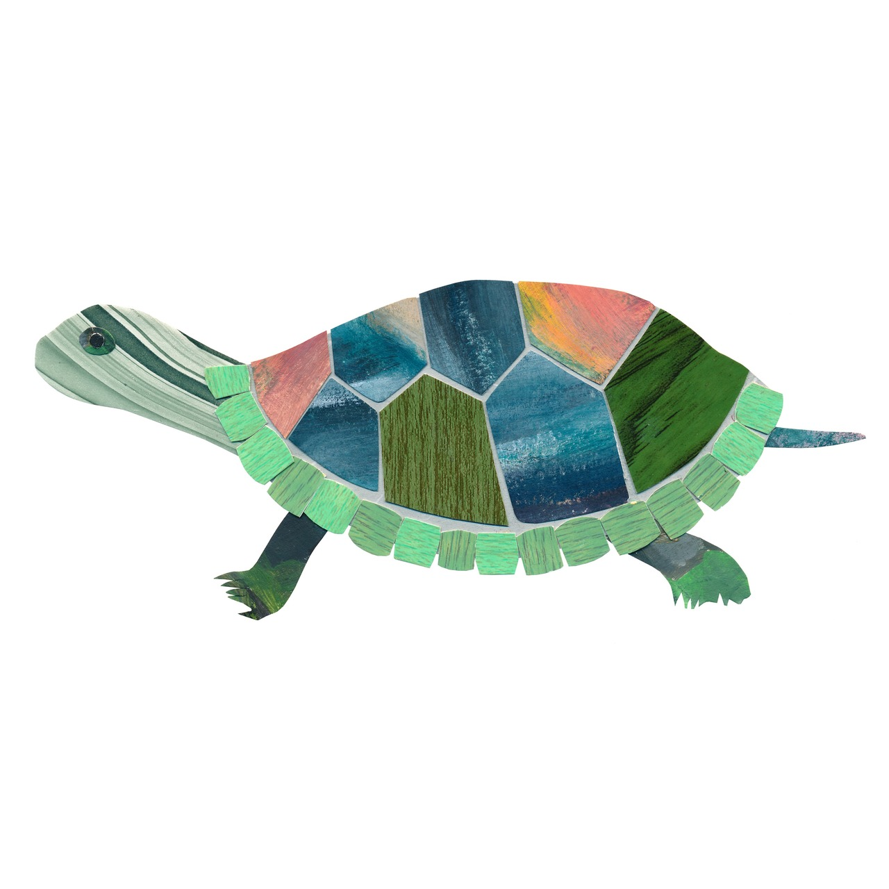 an animal a day    T  for turtle