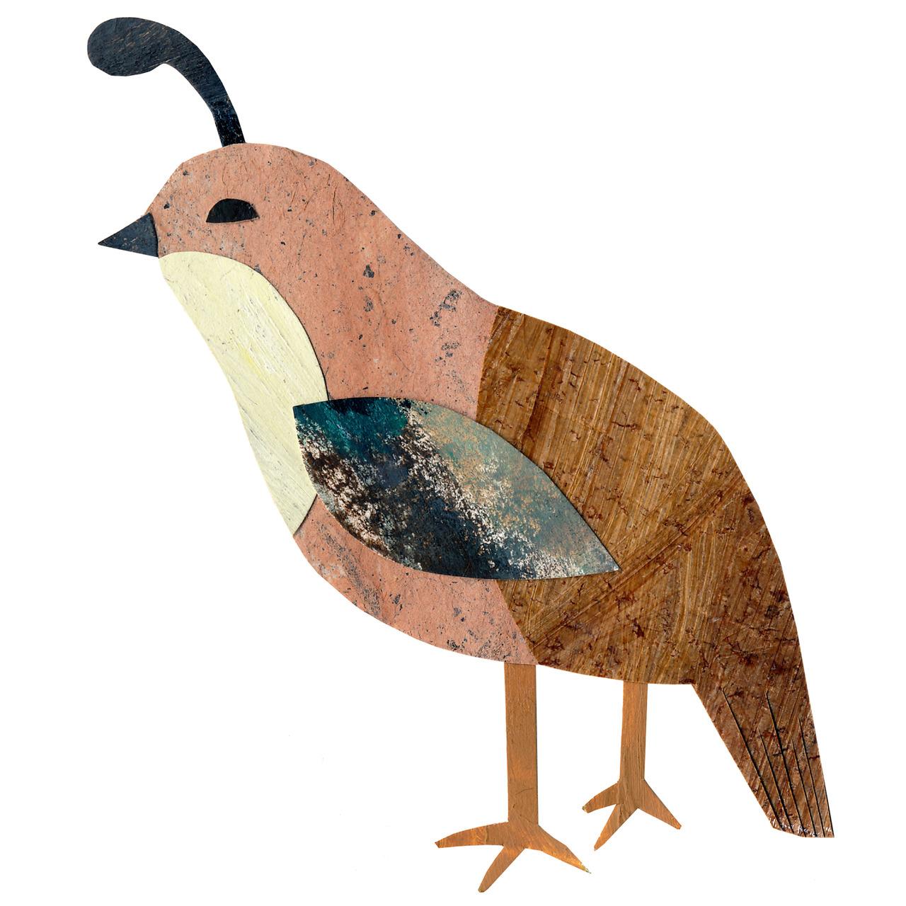 an animal a day    Q  for quail